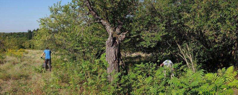 Götterbaumweide-05-10x25s