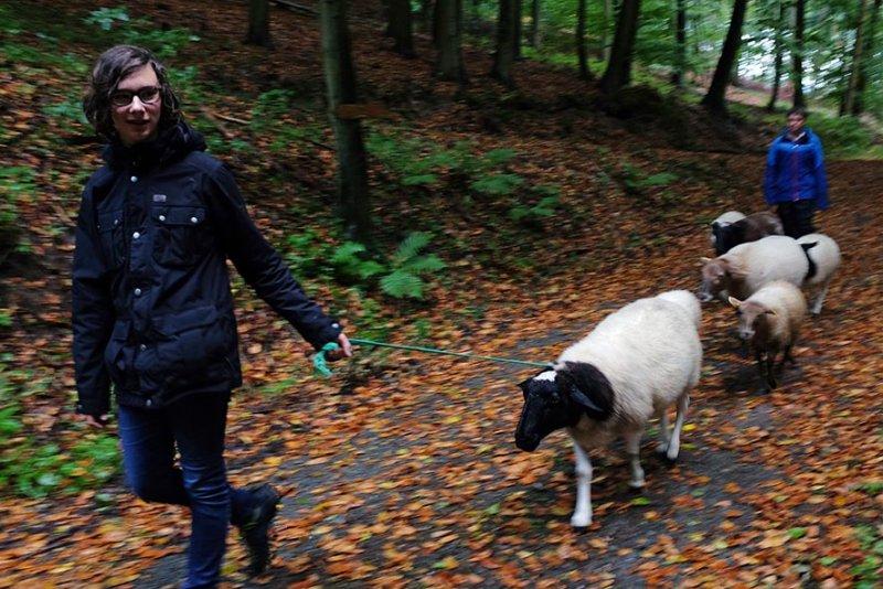 Durch den Wald 07