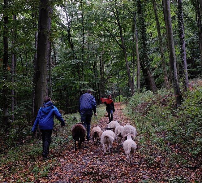 Durch den Wald 04