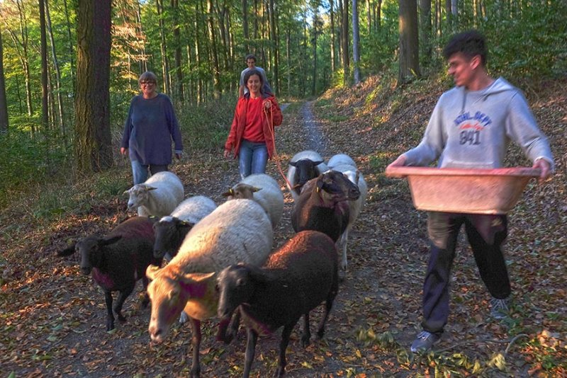 Schafe Wald Langer Berg 03