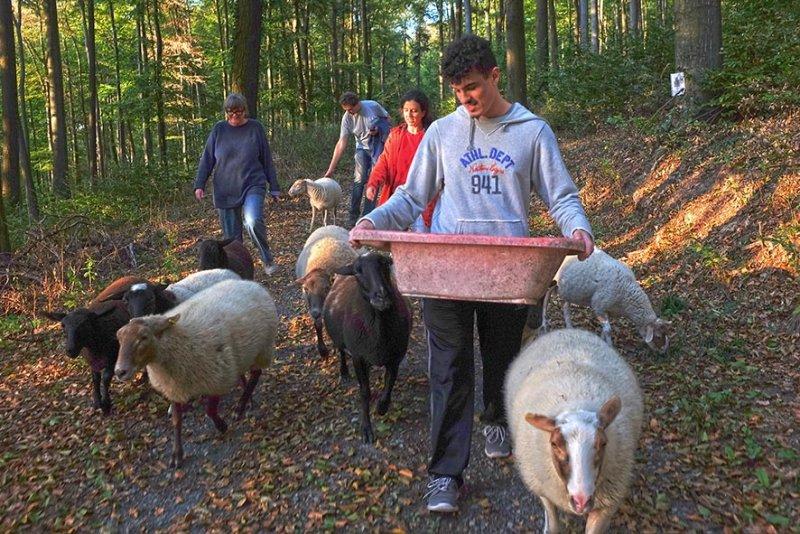 Schafe Wald Langer Berg 04