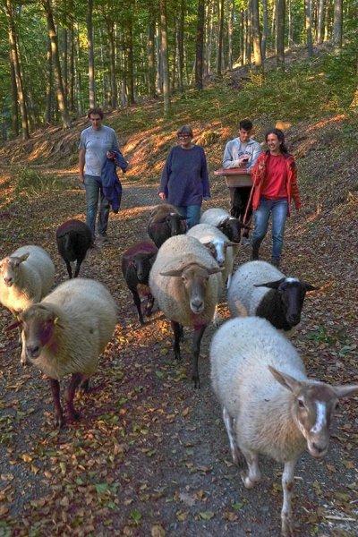 Schafe Wald Langer Berg 05