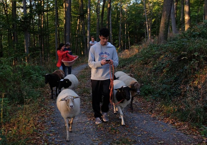 Schafe Wald Langer Berg 06