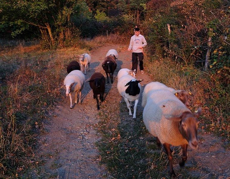 Schafe Wald Langer Berg 15