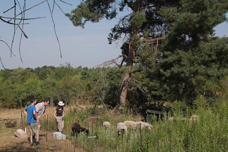 Einsatz Bienenweide - Schafgruppe 2