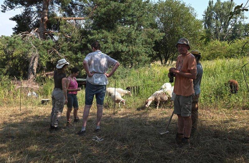 Einsatz Bienenweide - Schafgruppe 3