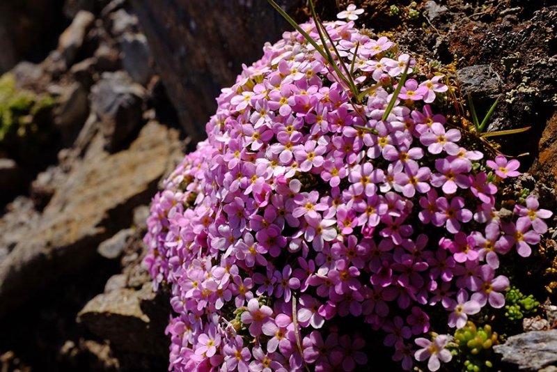 10 Blütenkissen am Scheibler 1 10x15s