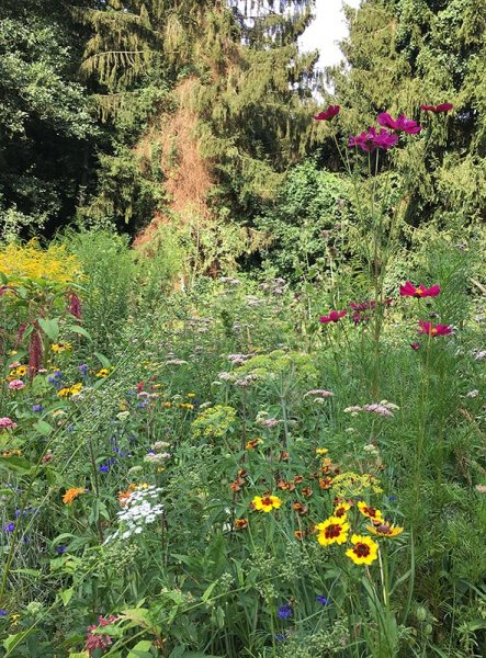 Blumenwiese Etzwiesen 2