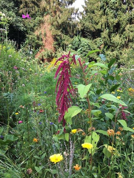 Blumenwiese Etzwiesen 3