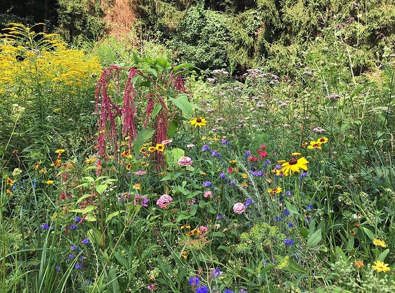 Blumenwiese Etzwiesen 5