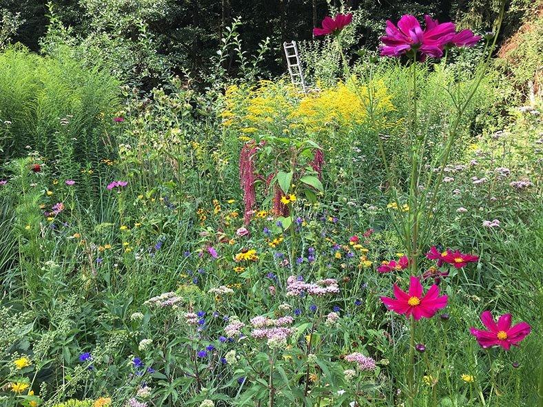 Blumenwiese Etzwiesen 6