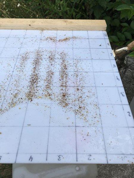 Imkerstand - Varroa zählen 2
