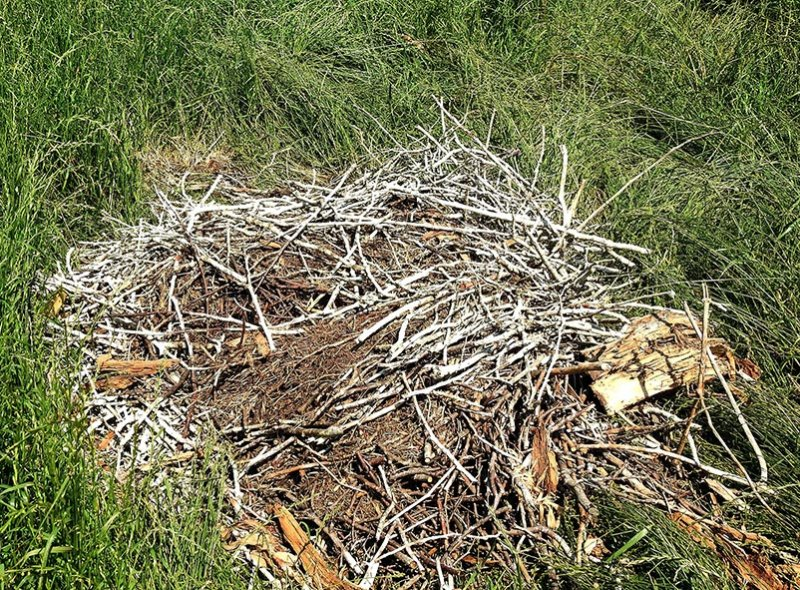04 Abgestürztes Nest