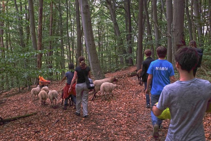 Schafwanderung 30 10x15s