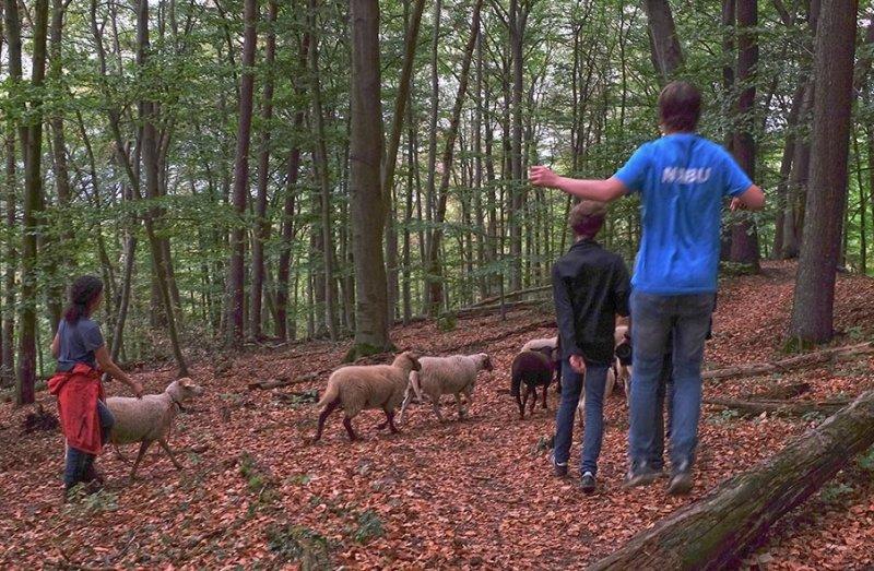 Schafwanderung 32 10x15s