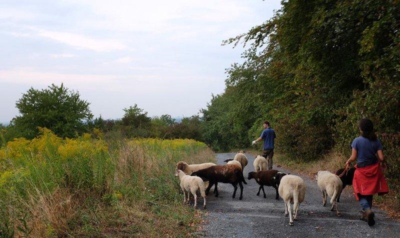 Schafwanderung 34 10x16s