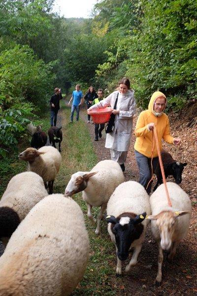 Schafwanderung 4 10x15s