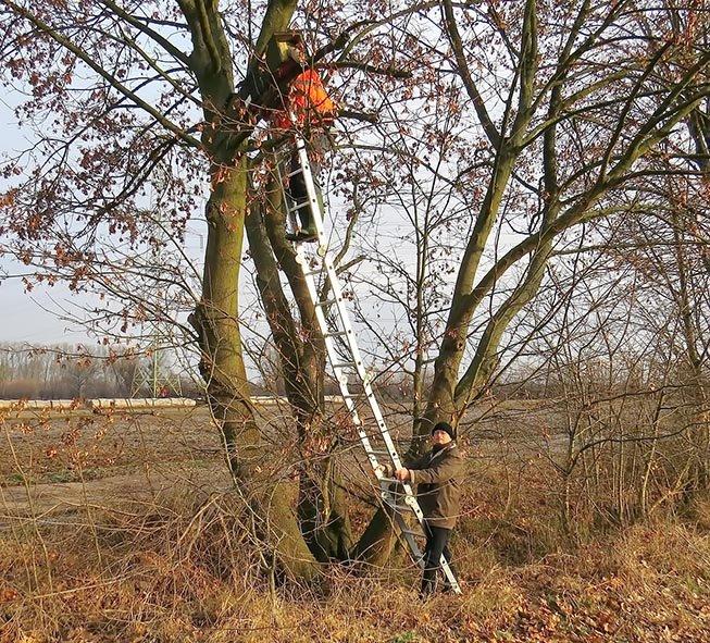 Kontrolle der Steinkauz-Kästen bei Griesheim 2