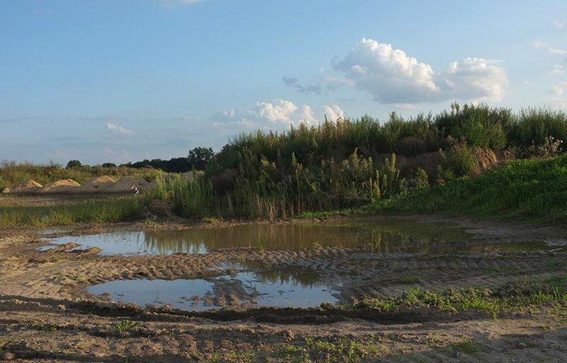 Laichgewässer der Kreuzkröte bei Bickenbach 1
