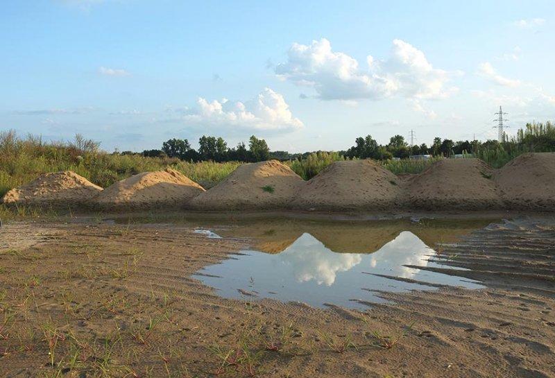 Laichgewässer der Kreuzkröte bei Bickenbach 2