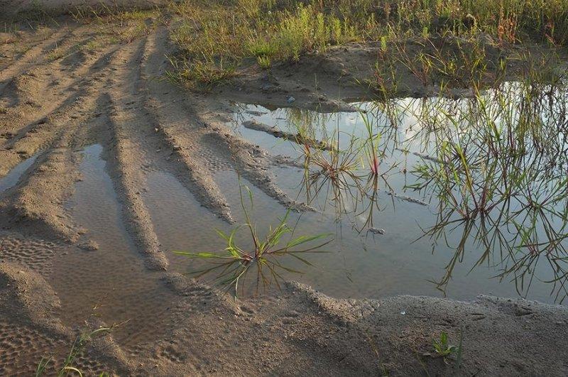 Laichgewässer der Kreuzkröte bei Bickenbach 4