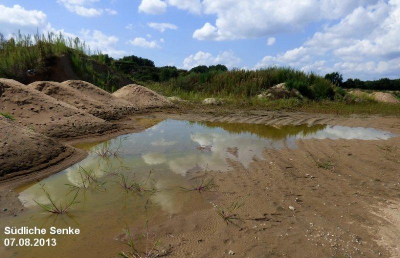 Laichgewässer der Kreuzkröte bei Bickenbach 5