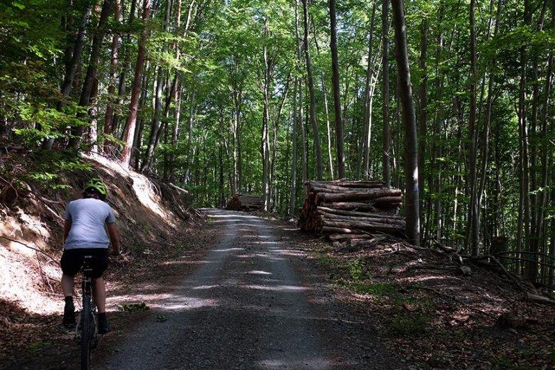 Holzlager in der Stilllegungsfläche im Staatswald 1