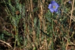 Bickenbacher Düne Blauer Lein 1 10x15s