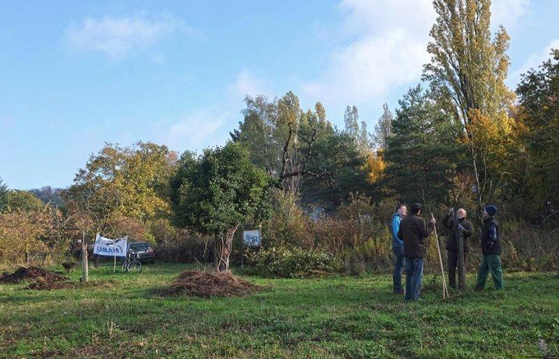 Aktionstag-Wühlmausgarten-Obstbaumscheiben-anlegen-02-10x15s
