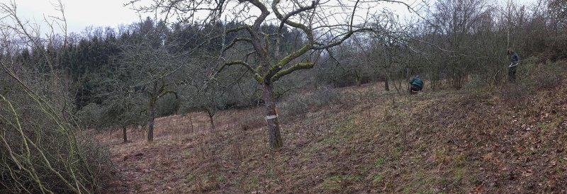 Streuobstwiese Nieder-Beerbach 20 10x29s