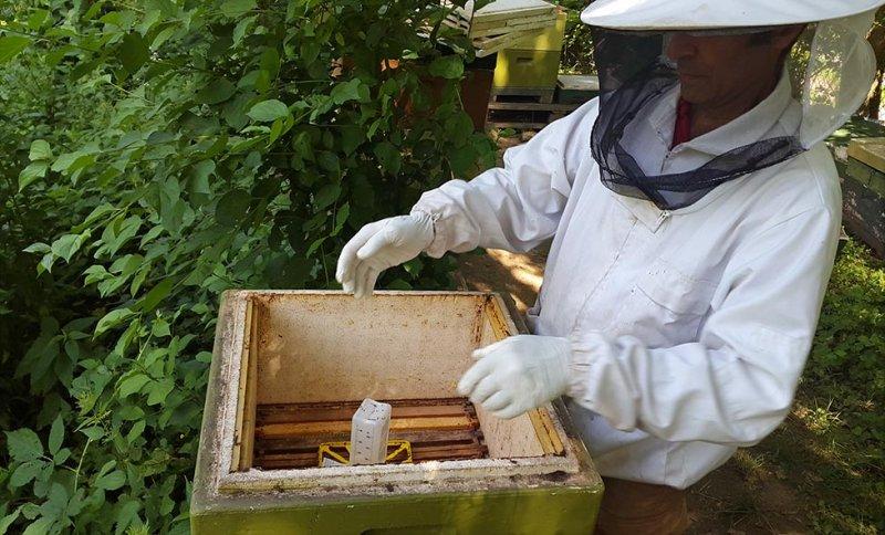 Kurzzeitbehandlung am Bienenstand 3