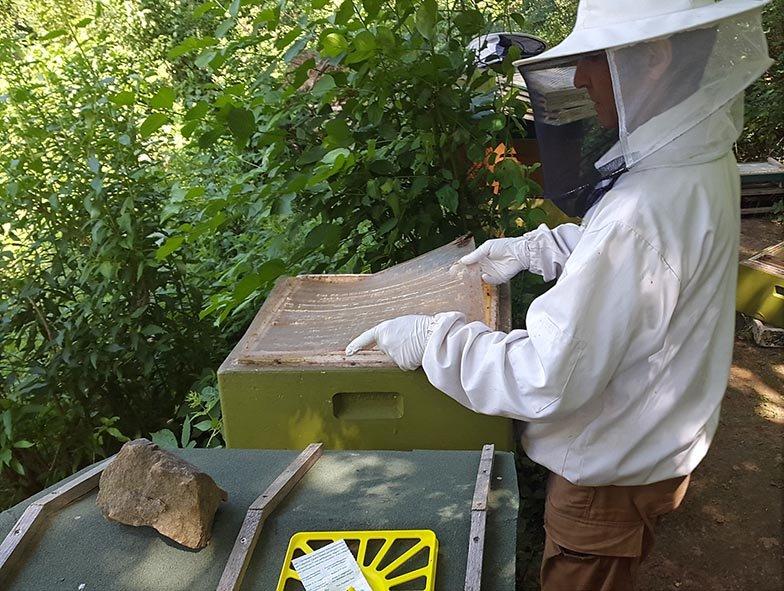 Kurzzeitbehandlung am Bienenstand 4