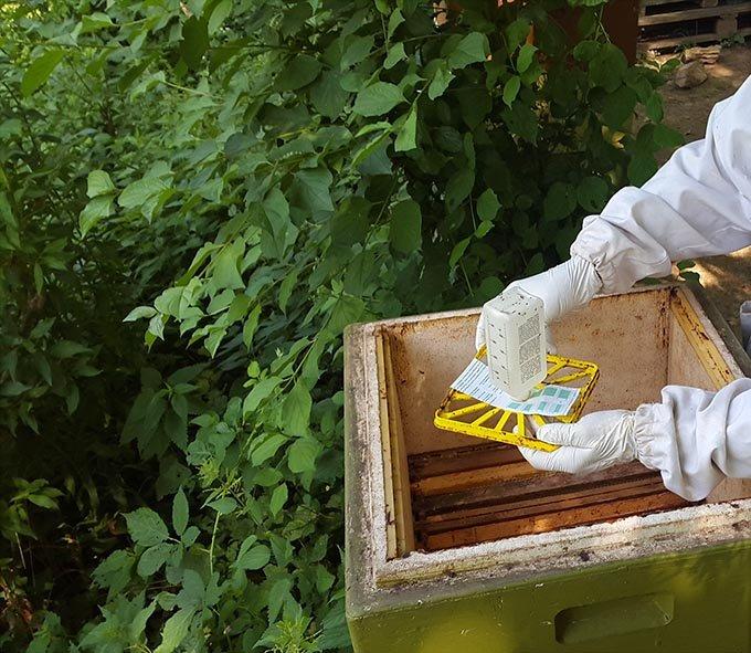 Kurzzeitbehandlung am Bienenstand 2