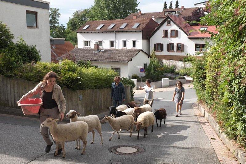 Schafwanderung Makchen 1