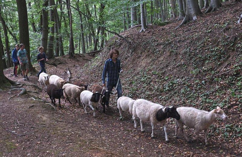 Schafwanderung in den Odenwald 9