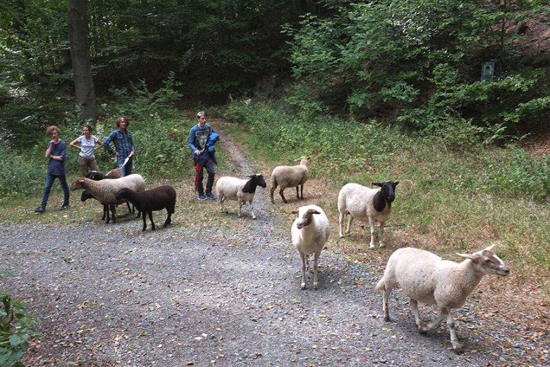 Schafwanderung in den Odenwald - Rast 2