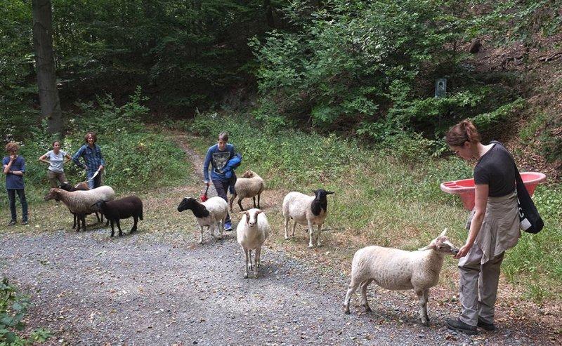 Schafwanderung in den Odenwald - Rast 3