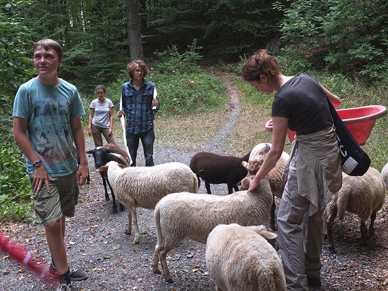 Schafwanderung in den Odenwald - Rast 6