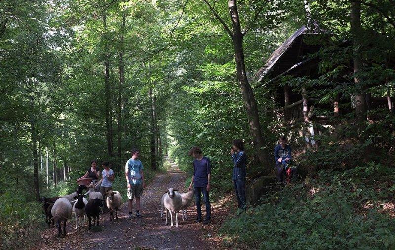 Schafwanderung in den Odenwald - Wühlmaushotel 1