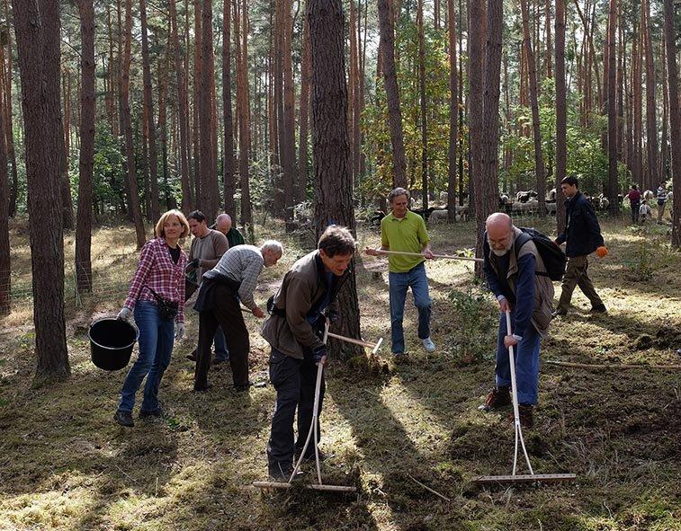 Pflegeeeinsatz im Seeheimer Wald - Die Grünen 3 10x13s