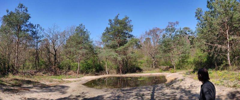 Amphibienteich-Malcher-Tanne-02-10x24s
