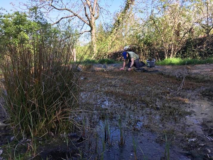 Tino-sammelt-Pflanzen-am-Amphibienteich-im-Wühlmausgarten-01-Foto-Jan-Zeißler-10x13s