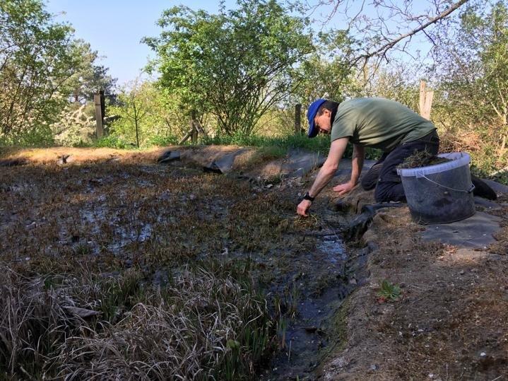 Tino-sammelt-Pflanzen-am-Amphibienteich-im-Wühlmausgarten-02-Foto-Jan-Zeißler-10x13s
