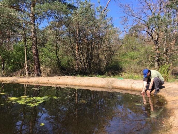 Wasserpflanzen-Amphibienteich-Malcher-Tanne-04-Foto-Jan-Zeißler-10x13s