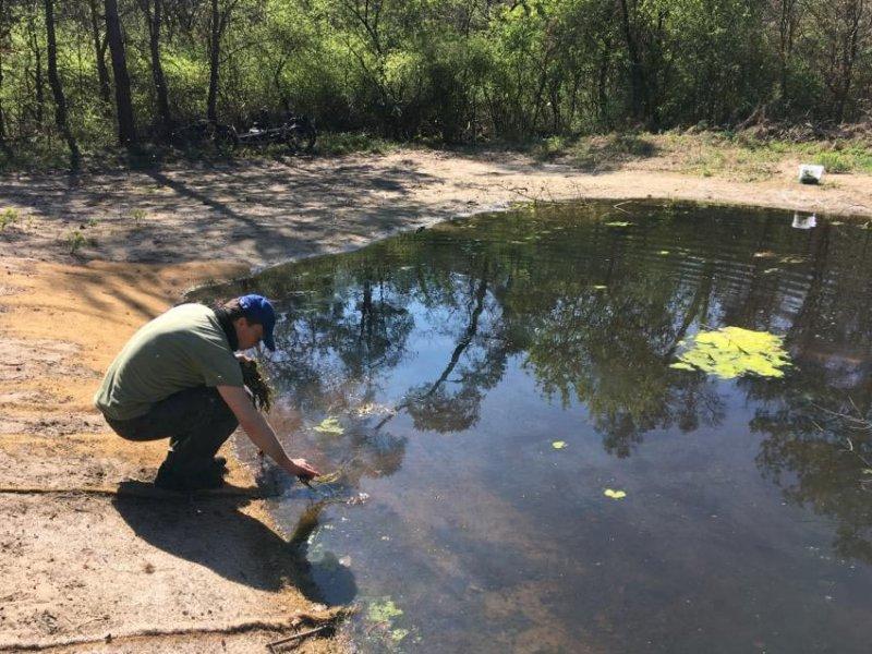 Wasserpflanzen-Amphibienteich-Malcher-Tanne-05-Foto-Jan-Zeißler-10x13s