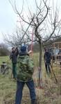NABU Obstbaumschnittkurs in Ober-Ramstadt
