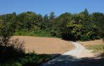 Unnötiger Wegebau im Mittelbachtal