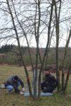 Baumschutz auf den Schafweiden