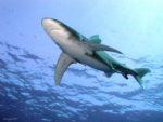 Informationsveranstaltung zum Hai Aquarium Pfungstadt
