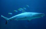 Stoppen Sie Shark City - The Seven Seas Ozeanarium in Pfungstadt